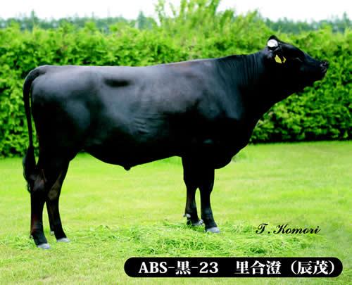 ABS-黒-22 大雪白清(たいせつしらきよ)